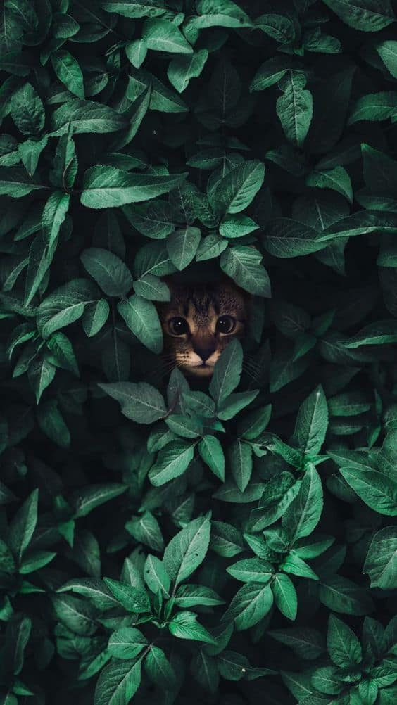 Cat Nature