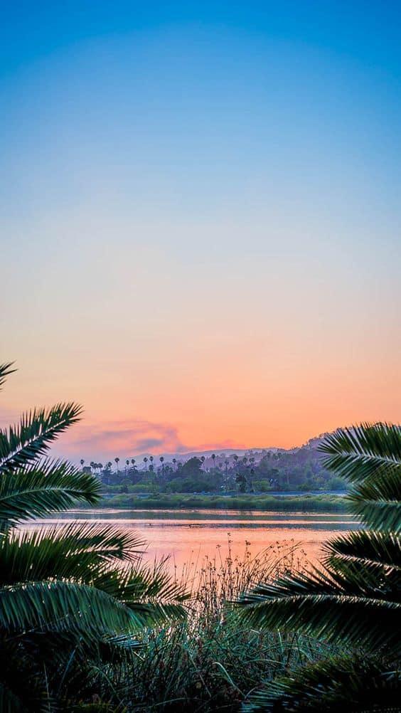 Jungle and Lake