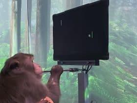 Monyet Bermain Game dengan Pikiran
